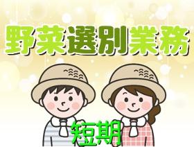 軽作業(9月下旬の短期案件 簡単な野菜の選別 重量物なし 日払いOK)