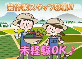 農業(8時~17時、実働7.5h、週3~OK、日曜定休、11月まで)